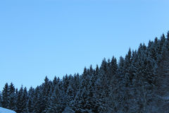 挪威森林003 免版税库存图片