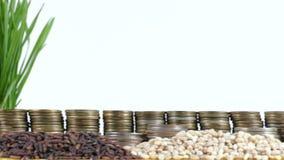 挪威沙文主义情绪与堆金钱硬币和堆麦子 股票视频