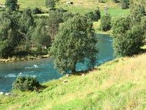 挪威河 免版税库存照片
