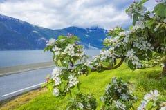 挪威海湾在春天之前 库存照片
