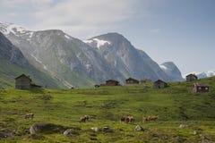 挪威的自然看法  库存图片