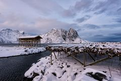 挪威的鱼干燥装置 免版税图库摄影