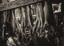 挪威语在更加干燥的乌贼属背景的干鱼 库存照片