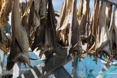 挪威语在更加干燥的背景的干鱼 库存照片