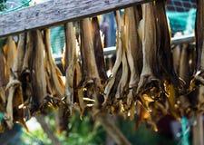 挪威语在更加干燥的背景的干鱼 免版税图库摄影