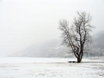 挪威雪冬天 库存图片