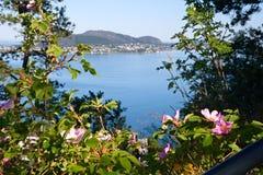 挪威,市的看法斯塔万格通过开花的狗 免版税库存照片