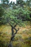 挪威, Lysefjord 向讲坛摇滚的Prekestolen的路 库存照片