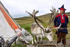 挪威:鹿和驯鹿交配动物者在全国衣裳穿戴了 免版税库存照片