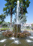 捆喷泉 Petrodvorets 彼得斯堡 免版税库存照片