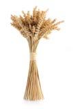 捆成熟麦子 库存照片