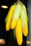 捆绑玉米 免版税图库摄影