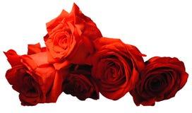 捆绑玫瑰 库存图片