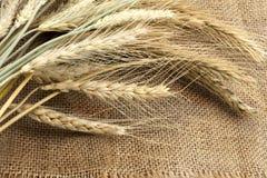 捆绑耳朵袋装麦子 免版税库存图片