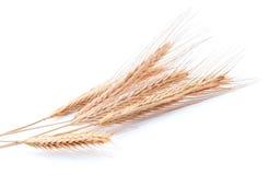 捆绑金黄麦子白色 库存照片
