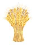 捆麦子耳朵 免版税库存照片