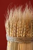 捆麦子 免版税图库摄影