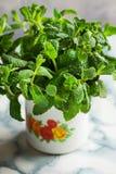 捆绑在搪瓷杯子的新鲜的有机薄菏在大理石桌面、春天或者夏天,阳光 免版税库存图片