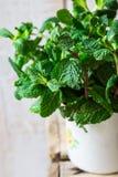 捆绑在搪瓷杯子的新鲜的有机薄菏在被风化的木箱子、春天或者夏天,自然光 免版税库存图片