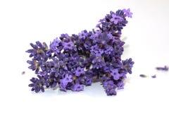 捆绑在白色背景的淡紫色 库存照片