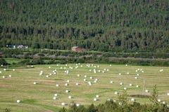捆绑在领域的秸杆在收获以后在挪威 免版税库存照片