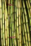捆绑新鲜的甘蔗 免版税库存照片