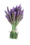 捆绑淡紫色 免版税库存图片