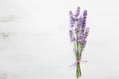 捆绑淡紫色 免版税库存照片