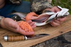 捉住切开新鲜的三文鱼 免版税库存照片
