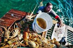 捉住在古巴的龙虾 图库摄影