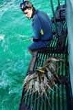 捉住在古巴的龙虾 库存图片