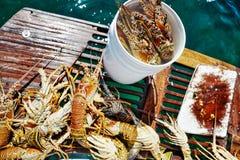 捉住在古巴的龙虾 免版税库存图片