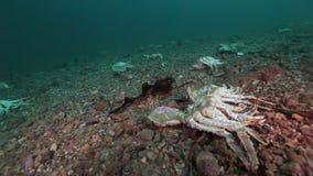 捉蟹巴伦支海一个离开的含沙底部的公墓  影视素材