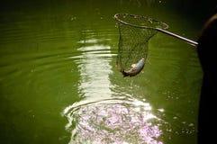 捕网鱼 库存图片