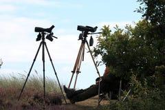 捕野禽者是观鸟在Falsterbo,瑞典 免版税库存图片