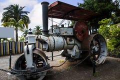 捕野禽者蒸汽路辗在圣卡塔琳娜州公园丰沙尔马德拉岛 免版税图库摄影
