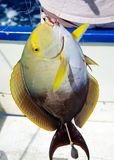 捕鱼体育运动 免版税库存图片