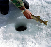 捕鱼冰安大略冬天 免版税库存照片