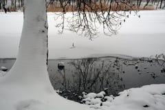 捕鱼冰湖冬天 一棵树的树干在雪的 免版税库存照片