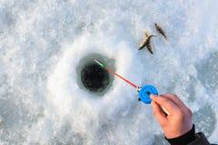 捕鱼冰谎言捕捉冬天zander 拿着标尺的渔夫手降下了入冰孔 说谎小的鱼近 库存图片