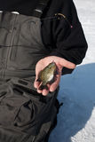 捕鱼冰 库存照片