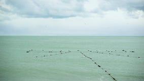 捕鱼网在岸附近的水中 股票录像