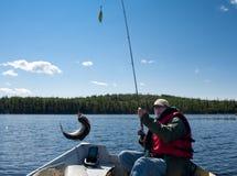 捕鱼鳟鱼 库存图片