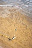 捕鱼 鲶鱼的-在勾子的青蛙诱饵在河 图库摄影