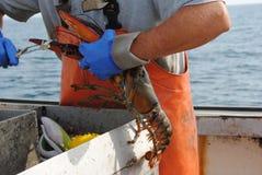捕龙虾的渔夫 库存照片