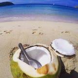 捞出在海滩的椰子 免版税库存图片