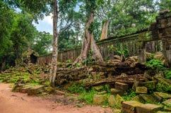 损伤墙壁石头在密集的密林 angkor柬埔寨 免版税图库摄影