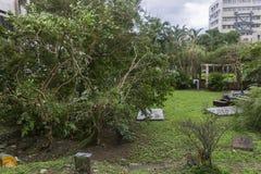 损坏做由台风Soulik对台北市 图库摄影