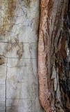 损坏的吠声层数在一棵老树的 库存照片