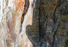 损坏的和被烧的树皮 免版税库存图片